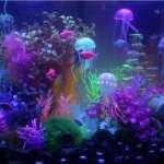 Что нужно знать об оформлении дизайна аквариумов