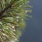 Заработать на спасении лесов