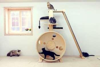 Правила выбора игрового комплекса для кошки