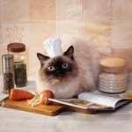 О плюсах и минусах корма для кошек Гоу