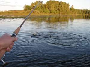 Полезный информационный портал для обожателей рыбалки