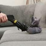 Почему лучше пользоваться услугами химчистки, а не чистить диван самостоятельно?