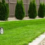Инструкция по созданию газона своими руками от портала «GardenNews.ru»