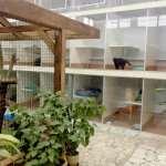 Гостиница для кошек – забота и внимание к вашему домашнему любимцу