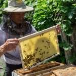 Как помочь пчелам тянуть вощину?