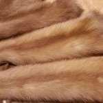 Шкурки куницы — востребованный материал для пошива и отделки
