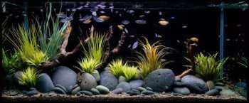 Декор аквариума: что для него можно использовать