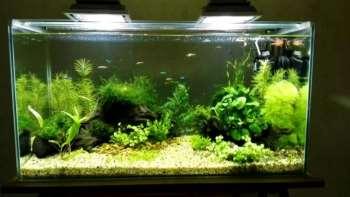 Организация освещения в аквариуме