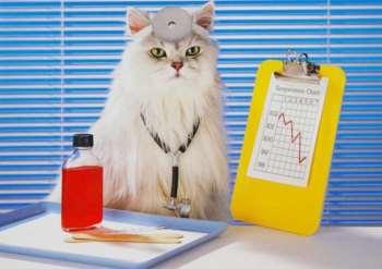 Фронтлайн для кошек: особенности устранения клещей и блох