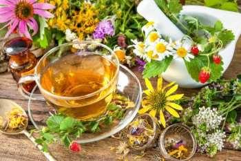 Herbal Harvest – лучший помощник в выборе лечебных трав